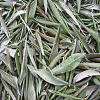 Extrakt aus Olivenblättern